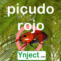 picudo rojo ynject